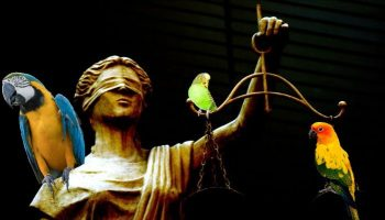 statue of justice with parrots perching