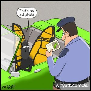 butterfly driving car taling to officer looking a picture of caterpillar